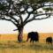 Viaggio in Sudafrica: voli A/R da Milano a Johannesburg a SOLI 373€, da aprile a settembre 2021 (agosto incluso)!